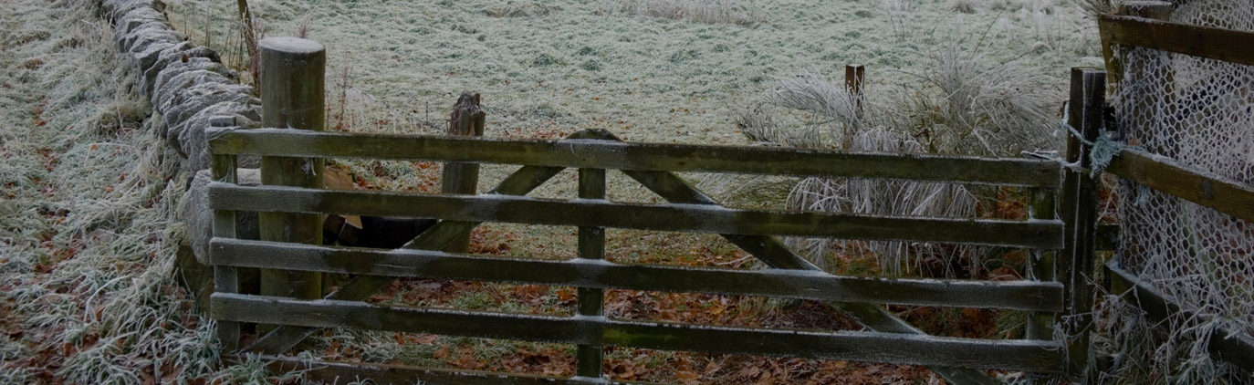 Image of a gate with frost