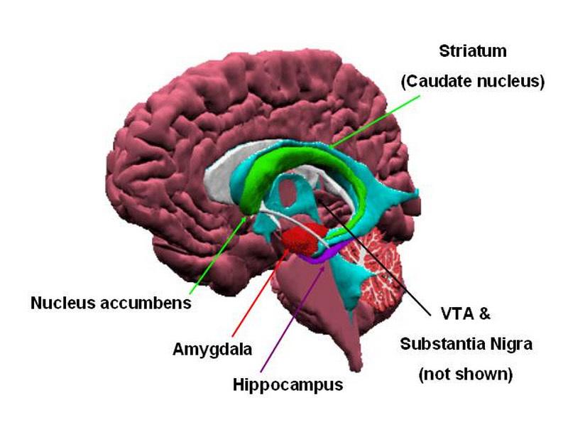 Beta Catenin And Depression Gateway Psychiatric