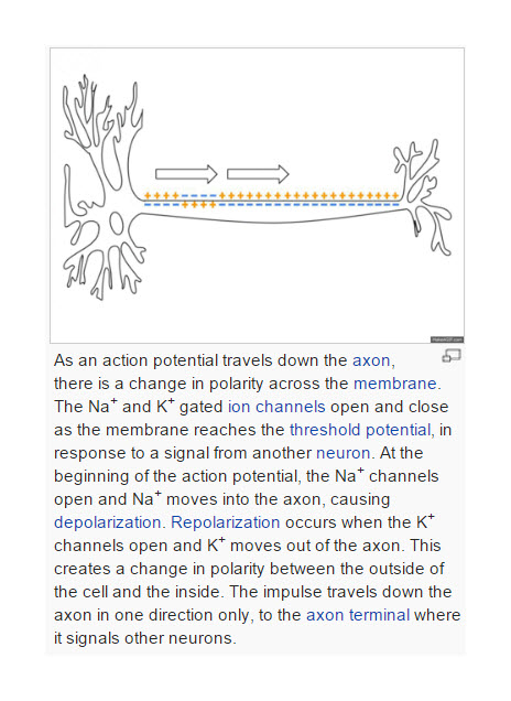 Sodium Channels Action Potential