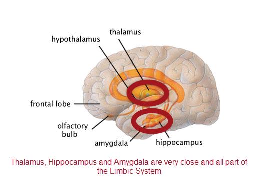 Brain Morphometry Separates Bipolar vs Unipolar - Gateway ...
