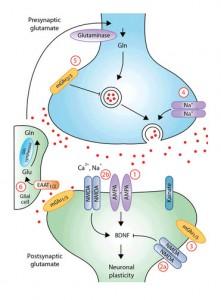 NMDA Receptor and Depression