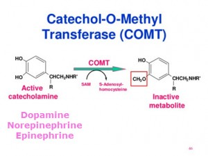 Catechol O Methyl Transferase