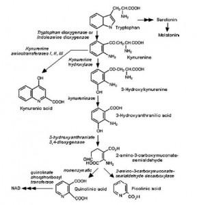 kynurenine pathway