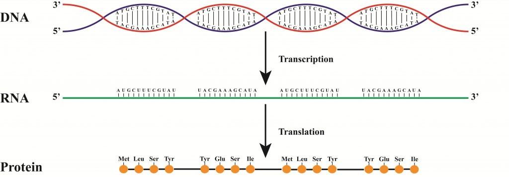 DNA-1024x356