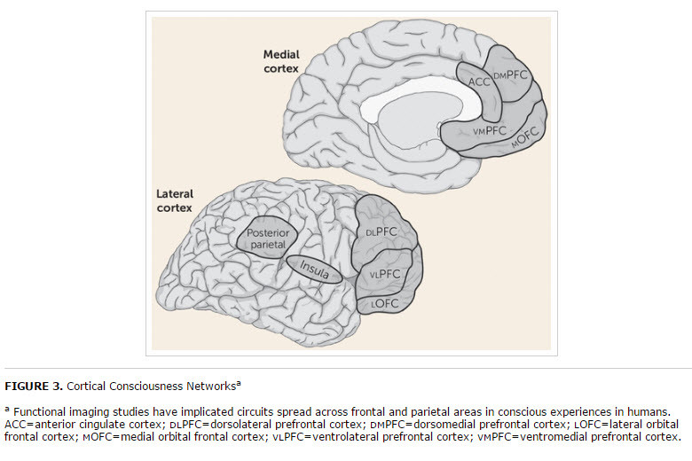 cortical-consciousness-networks