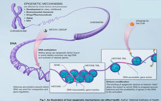 Epigenetic Mechanisms of Change in Brain Function